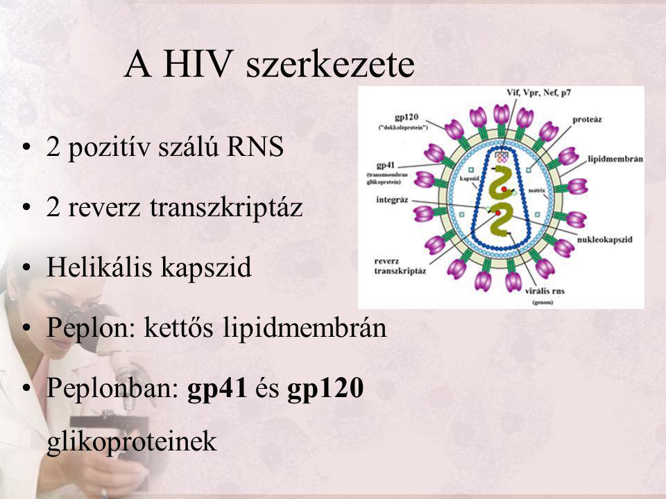 A HIV szerkezete 2 pozitív szálú RNS 2 reverz transzkriptáz Helikális kapszid Peplon: kettős lipidmembrán Peplonban: gp41 és gp120 glikoproteinek
