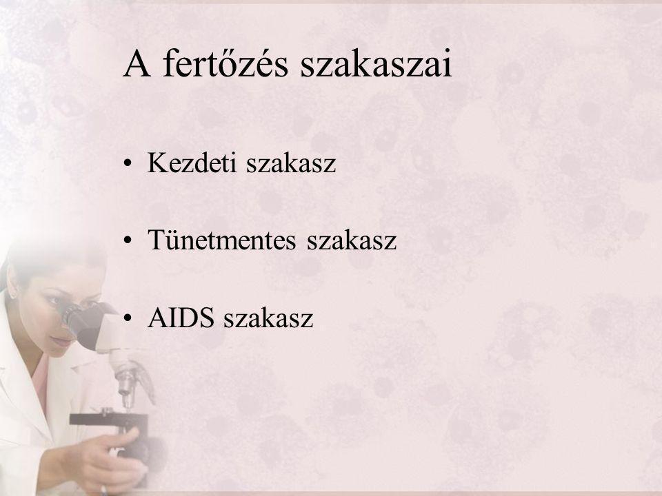 A fertőzés szakaszai Kezdeti szakasz Tünetmentes szakasz AIDS szakasz