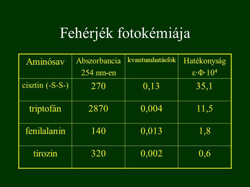 Fehérjék fotokémiája Aminósav Abszorbancia 254 nm-en kvantumhatásfok Hatékonyság ε·Φ·10 4 cisztin (-S-S-) 2700,1335,1 triptofán28700,00411,5 fenilalan
