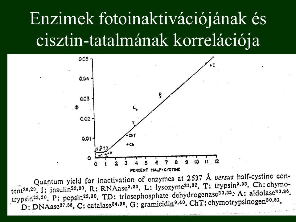 Enzimek fotoinaktivációjának és cisztin-tatalmának korrelációja