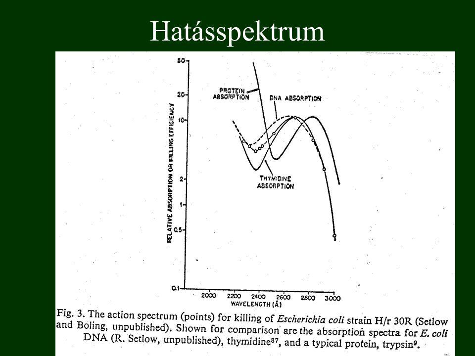 A szemlencsében képződő fototermék spektruma