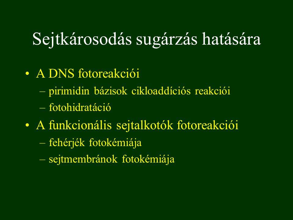 DNA cikloaddíció