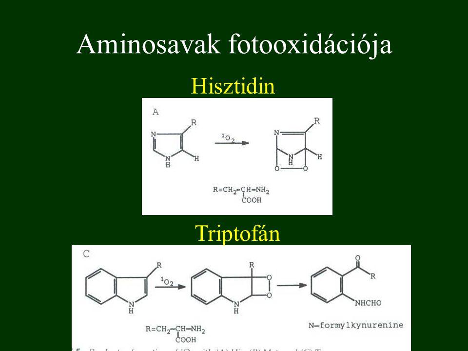 Fehérjék fotokémiája Aminósav Abszorbancia 254 nm-en kvantumhatásfok Hatékonyság ε·Φ·10 4 cisztin (-S-S-) 2700,1335,1 triptofán28700,00411,5 fenilalanin1400,0131,8 tirozin3200,0020,6