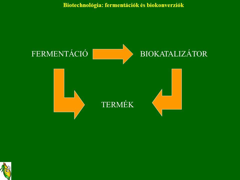 Biotechnológia: fermentációk és biokonverziók FERMENTÁCIÓBIOKATALIZÁTOR TERMÉK