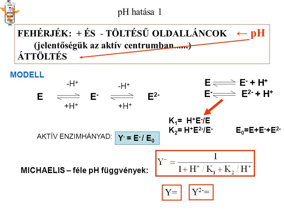 pH hatása 1 FEHÉRJÉK: + ÉS - TÖLTÉSŰ OLDALLÁNCOK ← pH (jelentőségük az aktív centrumban......) ÁTTÖLTÉS K 1 = H + E - /E K 2 = H + E 2- /E - E 0 =E+E - +E 2- E E - E 2- MODELL -H + +H + -H + +H + E E - + H + E - E 2- + H + AKTÍV ENZIMHÁNYAD: Y- = E- / E0Y- = E- / E0 MICHAELIS – féle pH függvények: Y= Y 2- =