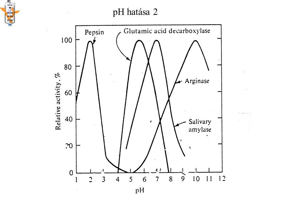 Hőmérséklet hatása Kettős hatás Reakciósebesség nő Csökken: denaturálódás irreverzibilis reverzibilis Időtől is függ!