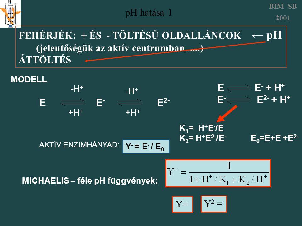 pH hatása 1 BIM SB 2001 FEHÉRJÉK: + ÉS - TÖLTÉSŰ OLDALLÁNCOK ← pH (jelentőségük az aktív centrumban......) ÁTTÖLTÉS K 1 = H + E - /E K 2 = H + E 2- /E - E 0 =E+E - +E 2- E E - E 2- MODELL -H + +H + -H + +H + E E - + H + E - E 2- + H + AKTÍV ENZIMHÁNYAD: Y- = E- / E0Y- = E- / E0 MICHAELIS – féle pH függvények: Y= Y 2- =