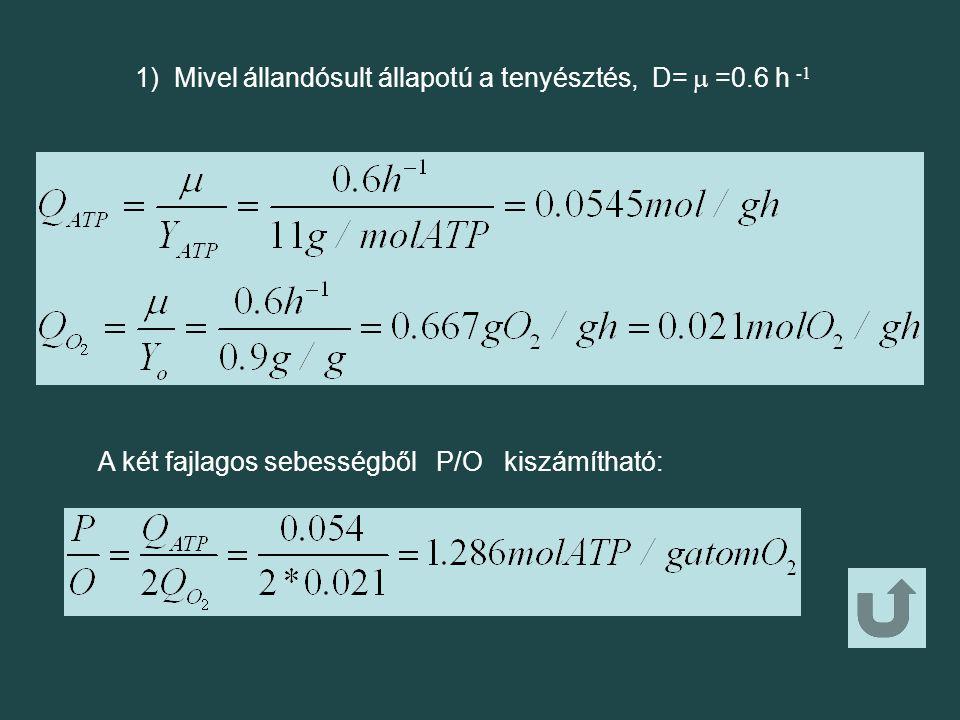 1) Mivel állandósult állapotú a tenyésztés, D=  =0.6 h -1 A két fajlagos sebességből P/O kiszámítható: