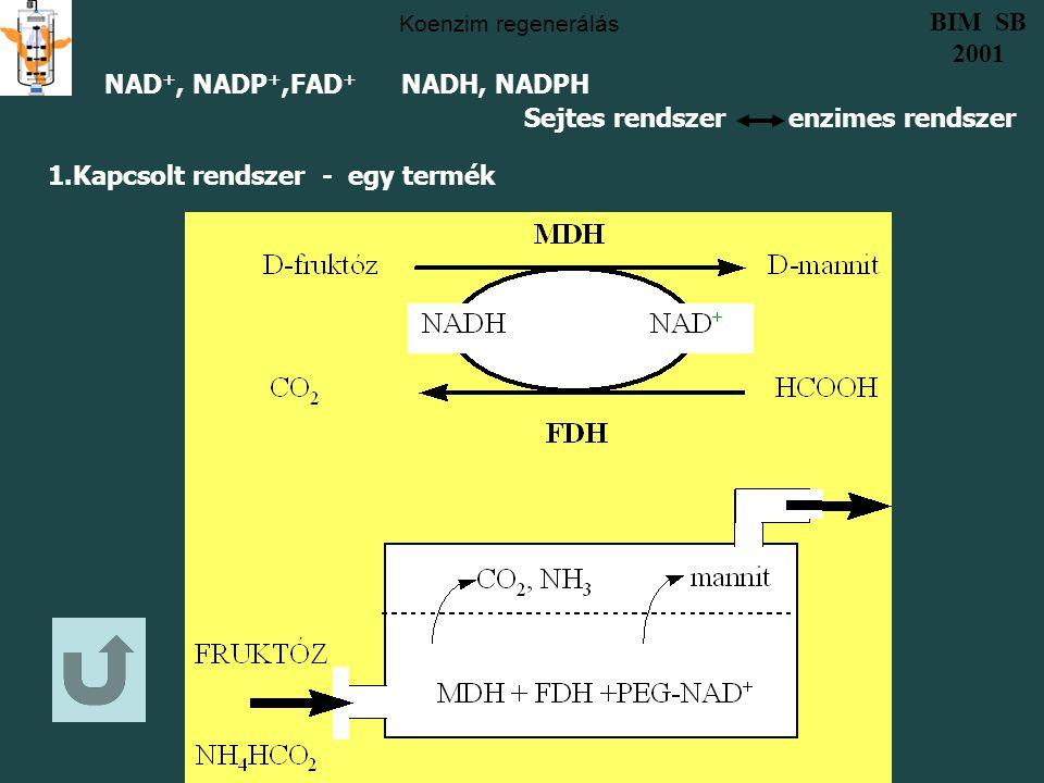 Koenzim regenerálás 1.Kapcsolt rendszer - egy termék NAD +, NADP +,FAD + NADH, NADPH Sejtes rendszer enzimes rendszer BIM SB 2001