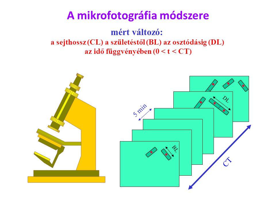 DL BL CT 5 min A mikrofotográfia módszere mért változó: a sejthossz (CL) a születéstől (BL) az osztódásig (DL) az idő függvényében (0 < t < CT)
