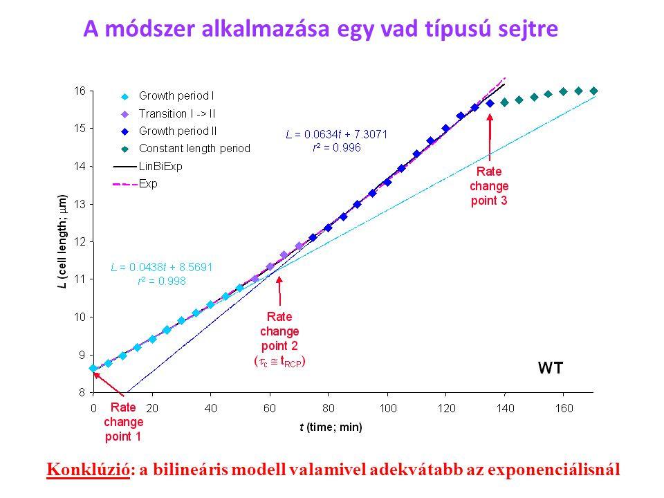 A módszer alkalmazása egy vad típusú sejtre Konklúzió: a bilineáris modell valamivel adekvátabb az exponenciálisnál
