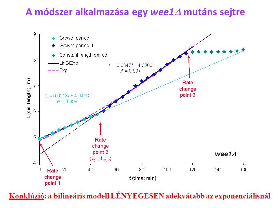No.% Bilineáris4270,0 Exponenciális58,3 Lineáris1321,7 Összes60100,0 60 vad típusú sejt növekedési mintázataira illesztett modellek közül a legadekvátabbak megoszlása Néhány vizsgált sejtciklus-mutáns esetén is hasonló eredmények adódnak ↓ Kevés exponenciális mintázat, de a lineáris mintázatok gyakorisága nagyobb lehet