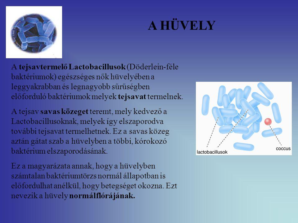 NORMÁL HÜVELYI FLÓRA (Lactobacillus-LB) LB biztosítja a normál pH-t (4.0) Biztosítja a hüvelynyákot, amely filmszerűen beborítja a hüvelyhámot Tejsav, H 2 O 2 termelődés Biztosítja a veleszületett immunválaszt –SLPI –Csökkenti a HIV transmissiot