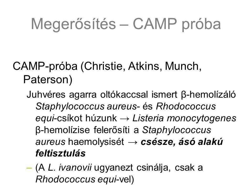 Megerősítés – CAMP próba CAMP-próba (Christie, Atkins, Munch, Paterson) Juhvéres agarra oltókaccsal ismert β-hemolízáló Staphylococcus aureus- és Rhod