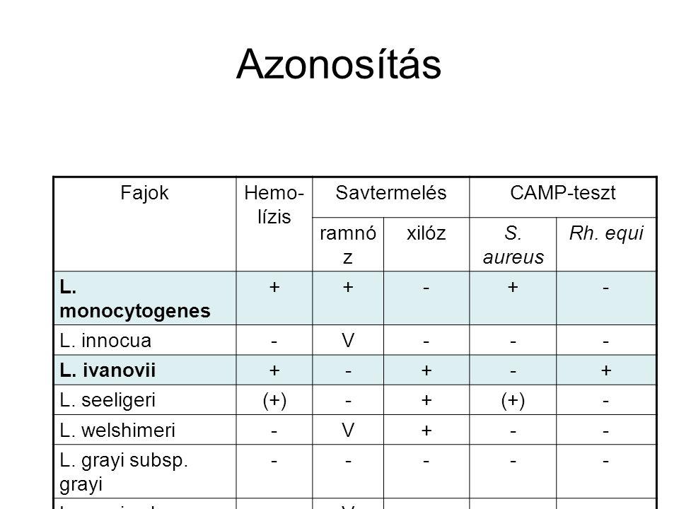 Azonosítás FajokHemo- lízis SavtermelésCAMP-teszt ramnó z xilózS. aureus Rh. equi L. monocytogenes ++-+- L. innocua-V--- L. ivanovii+-+-+ L. seeligeri