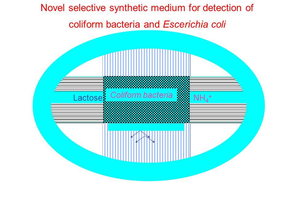 Novel selective synthetic medium for detection of coliform bacteria and Escerichia coli Lactose NH 4 + Pseudomonas Aeruginosa Coliform bacteria