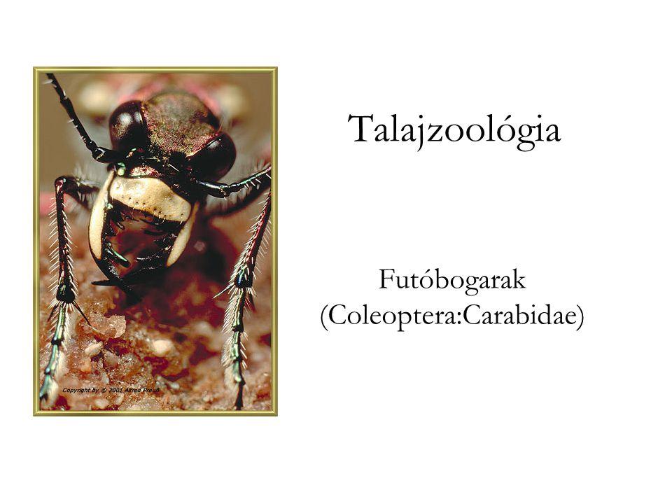 Talajzoológia Futóbogarak (Coleoptera:Carabidae)