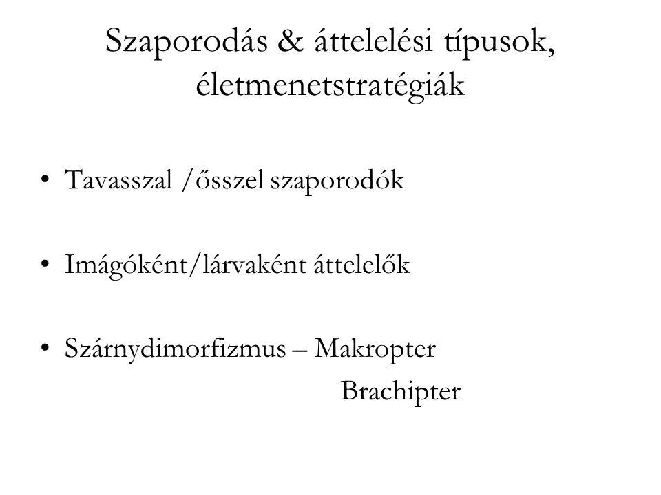 Szaporodás & áttelelési típusok, életmenetstratégiák Tavasszal /ősszel szaporodók Imágóként/lárvaként áttelelők Szárnydimorfizmus – Makropter Brachipter