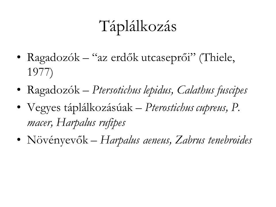 Táplálkozás Ragadozók – az erdők utcaseprői (Thiele, 1977) Ragadozók – Ptersotichus lepidus, Calathus fuscipes Vegyes táplálkozásúak – Pterostichus cupreus, P.