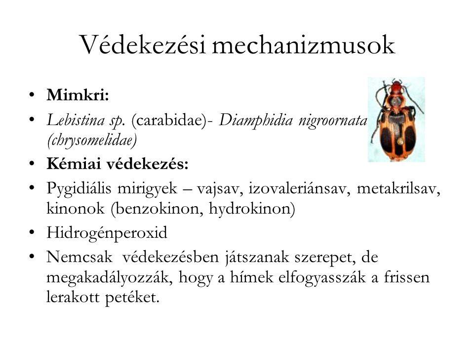 Védekezési mechanizmusok Mimkri: Lebistina sp.
