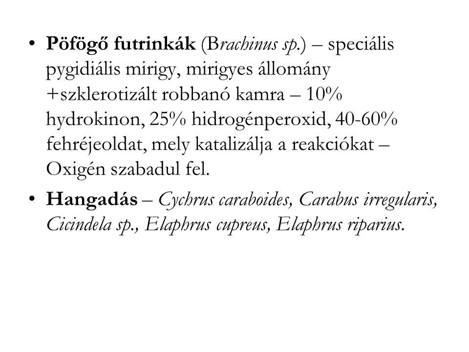 Pöfögő futrinkák (Brachinus sp.) – speciális pygidiális mirigy, mirigyes állomány +szklerotizált robbanó kamra – 10% hydrokinon, 25% hidrogénperoxid, 40-60% fehréjeoldat, mely katalizálja a reakciókat – Oxigén szabadul fel.