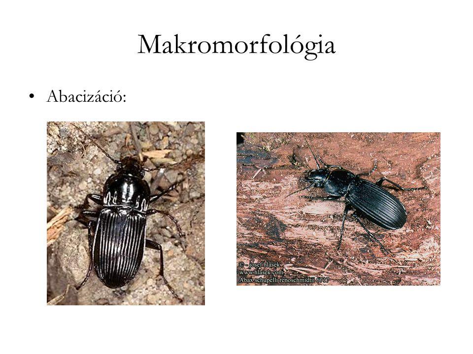 Makromorfológia Abacizáció:
