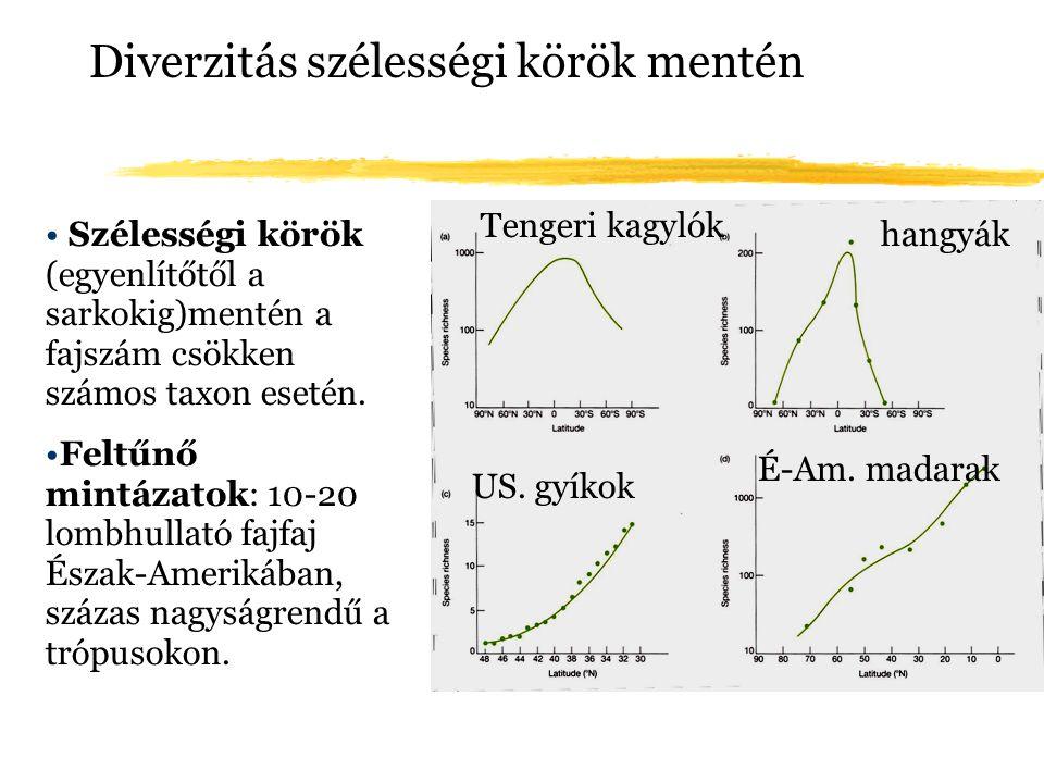Diverzitás szélességi körök mentén Szélességi körök (egyenlítőtől a sarkokig)mentén a fajszám csökken számos taxon esetén. Feltűnő mintázatok: 10-20 l