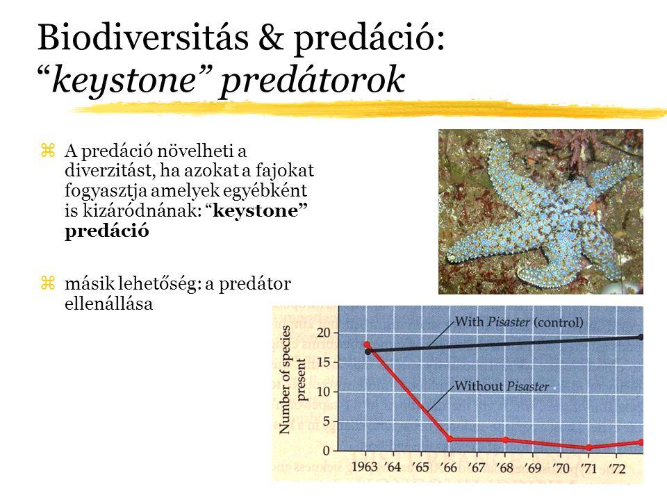 """Biodiversitás & predáció: """"keystone"""" predátorok zA predáció növelheti a diverzitást, ha azokat a fajokat fogyasztja amelyek egyébként is kizáródnának:"""