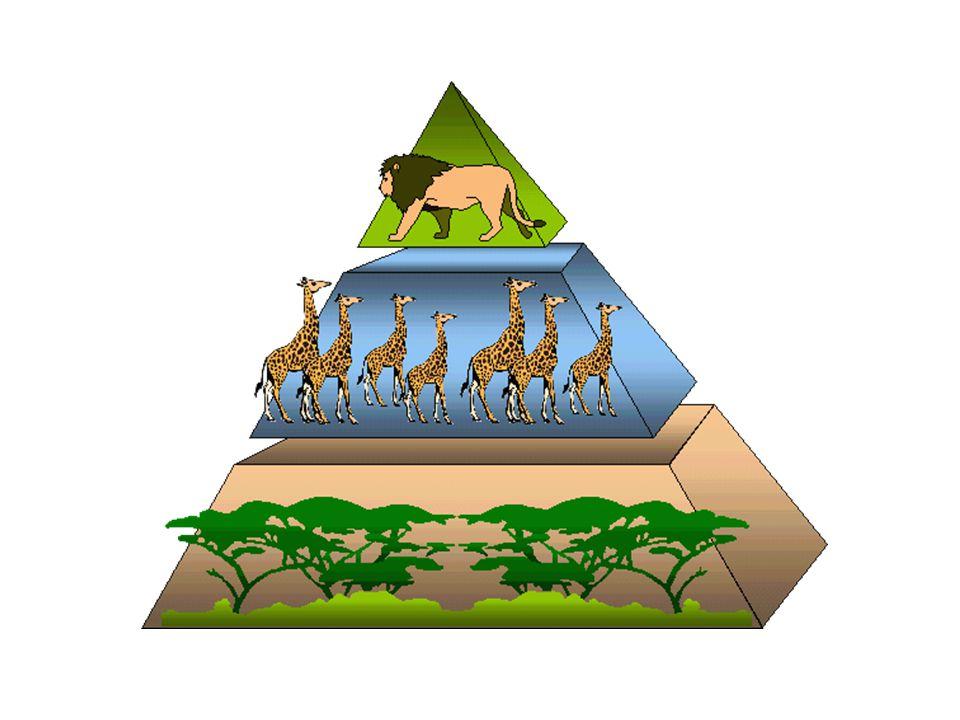 Biodiverzitás & kompetíció zA kompetíció közvetlen hatással van a biodiverzitásra az adott niche térben lévő fajok számával: Mi a limitálótényező.