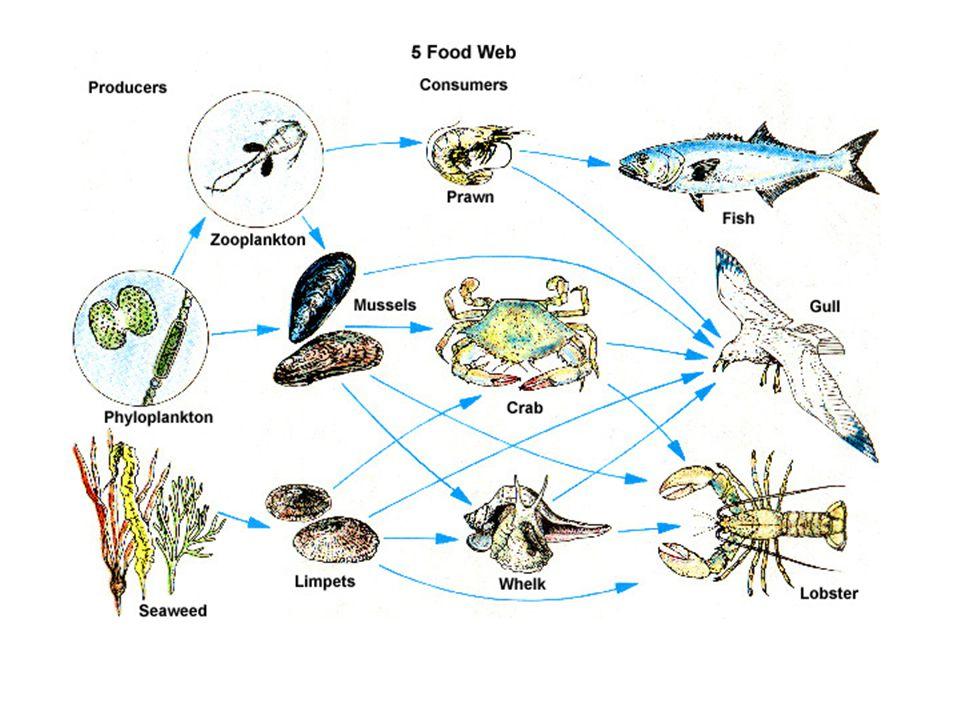 Biodiverzitás &élőhelyek az állatoknak:az élőhelyi sokféleség,mint pl.