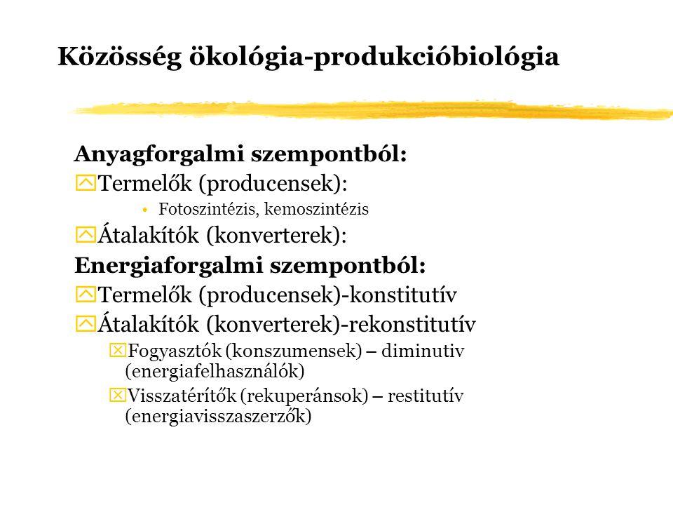 Közösség ökológia-produkcióbiológia Anyagforgalmi szempontból: yTermelők (producensek): Fotoszintézis, kemoszintézis yÁtalakítók (konverterek): Energi