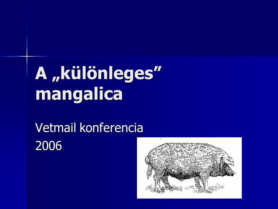 """A """"különleges mangalica Vetmail konferencia 2006"""
