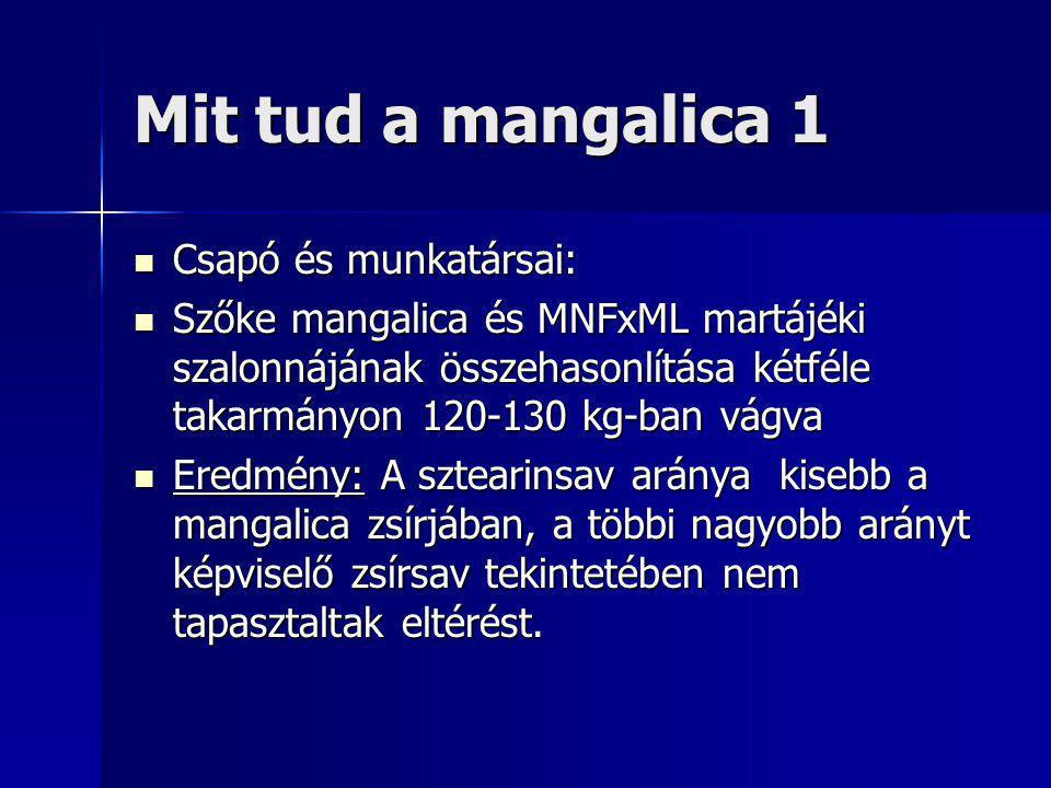 Mit tud a mangalica 1 Csapó és munkatársai: Csapó és munkatársai: Szőke mangalica és MNFxML martájéki szalonnájának összehasonlítása kétféle takarmányon 120-130 kg-ban vágva Szőke mangalica és MNFxML martájéki szalonnájának összehasonlítása kétféle takarmányon 120-130 kg-ban vágva Eredmény: A sztearinsav aránya kisebb a mangalica zsírjában, a többi nagyobb arányt képviselő zsírsav tekintetében nem tapasztaltak eltérést.