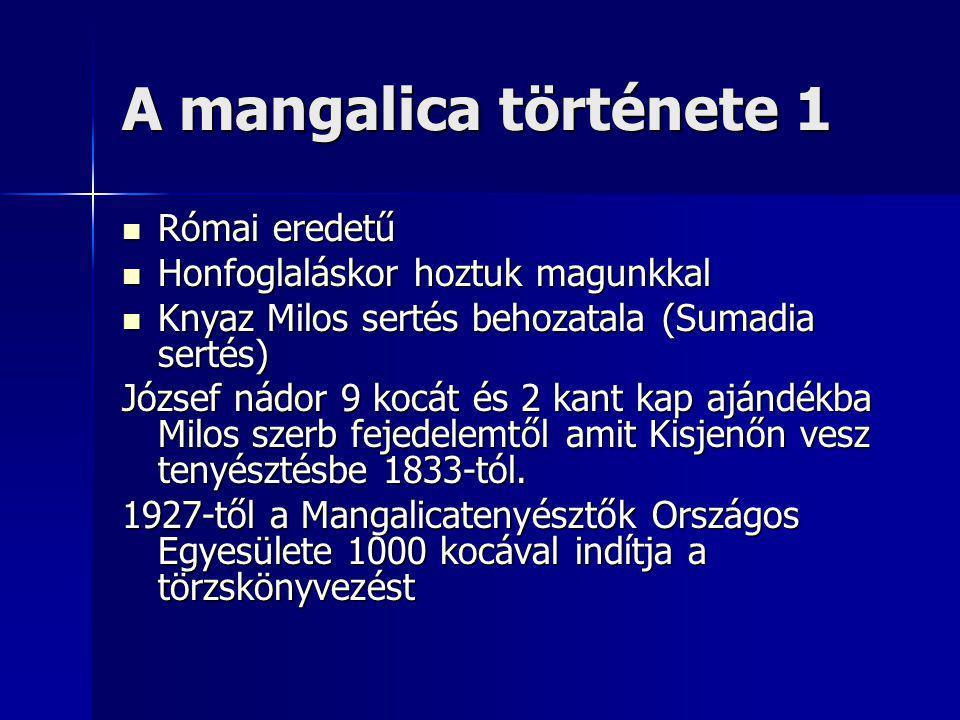 A mangalica története 1 Római eredetű Római eredetű Honfoglaláskor hoztuk magunkkal Honfoglaláskor hoztuk magunkkal Knyaz Milos sertés behozatala (Sumadia sertés) Knyaz Milos sertés behozatala (Sumadia sertés) József nádor 9 kocát és 2 kant kap ajándékba Milos szerb fejedelemtől amit Kisjenőn vesz tenyésztésbe 1833-tól.
