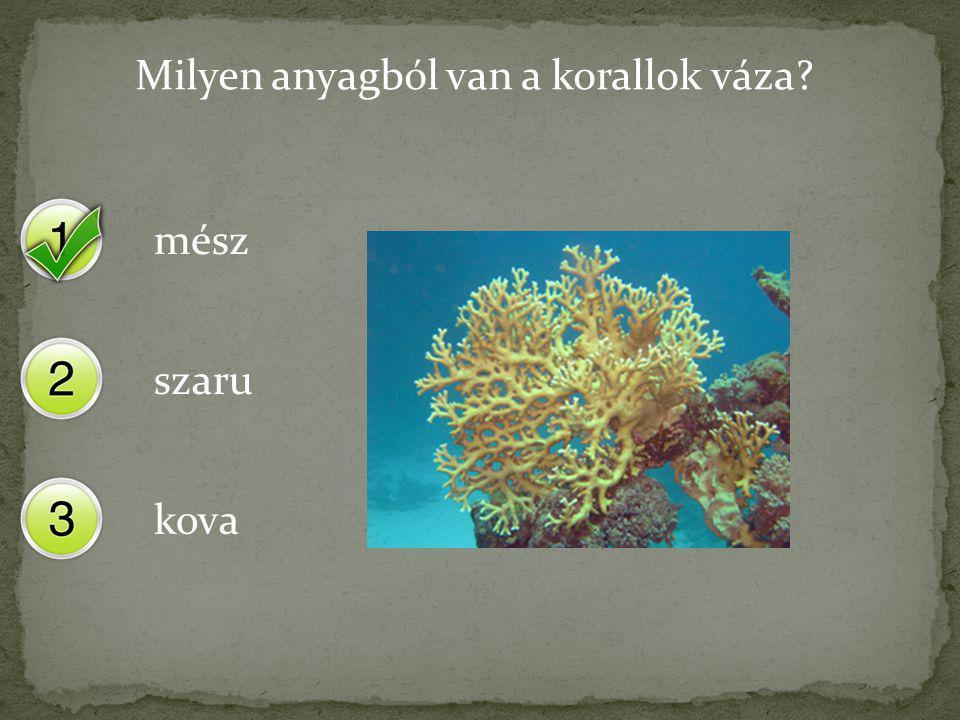 Milyen anyagból van a korallok váza? mész szaru kova