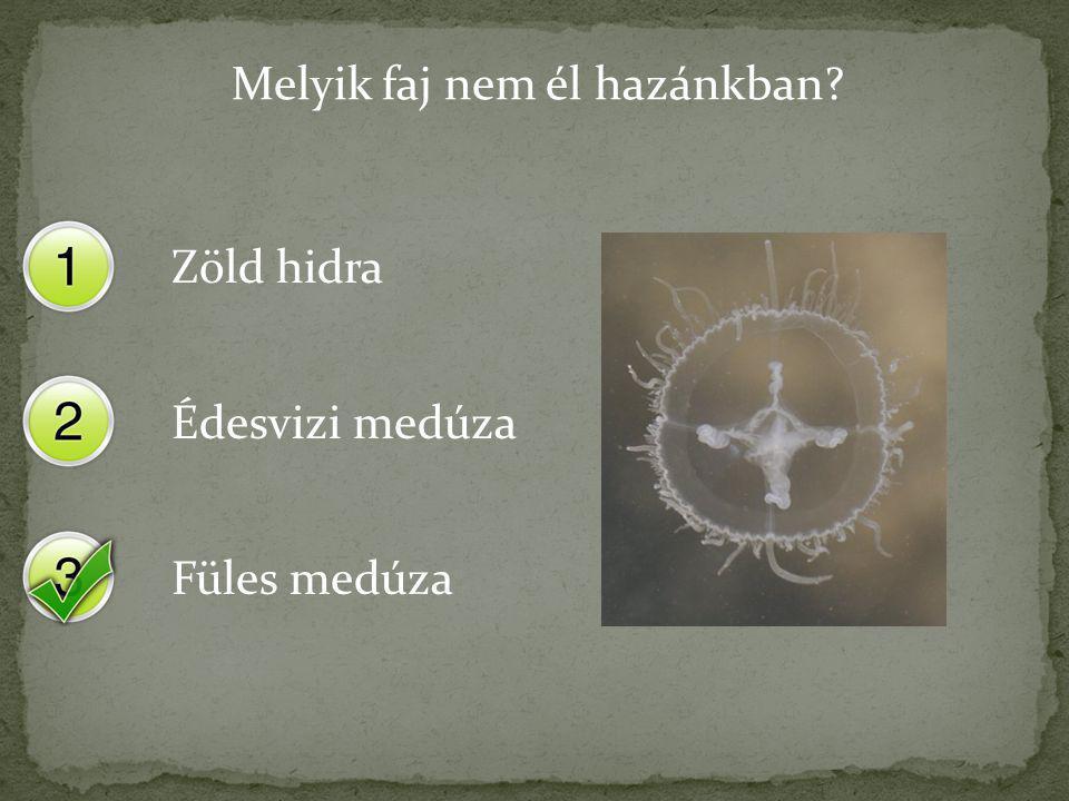 Melyik faj nem él hazánkban? Zöld hidra Édesvizi medúza Füles medúza