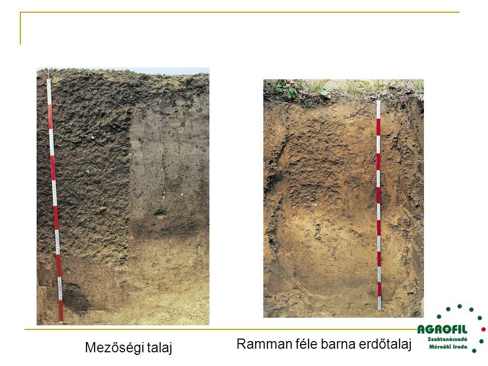 Ramman féle barna erdőtalaj Mezőségi talaj