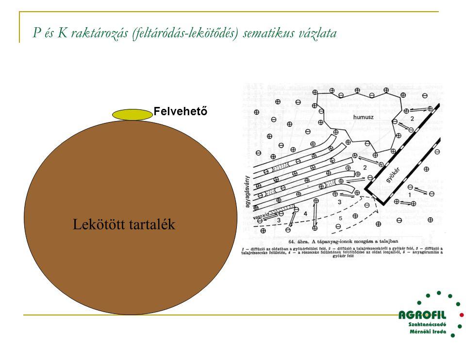 P és K raktározás (feltáródás-lekötődés) sematikus vázlata Lekötött tartalék Felvehető