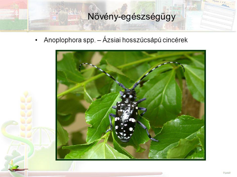 Növény-egészségügy Anoplophora spp. – Ázsiai hosszúcsápú cincérek F. Hérard