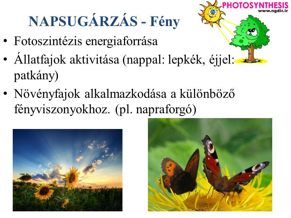 NAPSUGÁRZÁS - Fény Fotoszintézis energiaforrása Állatfajok aktivitása (nappal: lepkék, éjjel: patkány) Növényfajok alkalmazkodása a különböző fényviszonyokhoz.