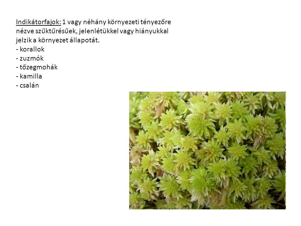 Indikátorfajok: 1 vagy néhány környezeti tényezőre nézve szűktűrésűek, jelenlétükkel vagy hiányukkal jelzik a környezet állapotát. - korallok - zuzmók