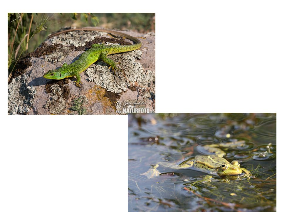 Abiotikus környezeti tényezők - Biotické faktory prostredia