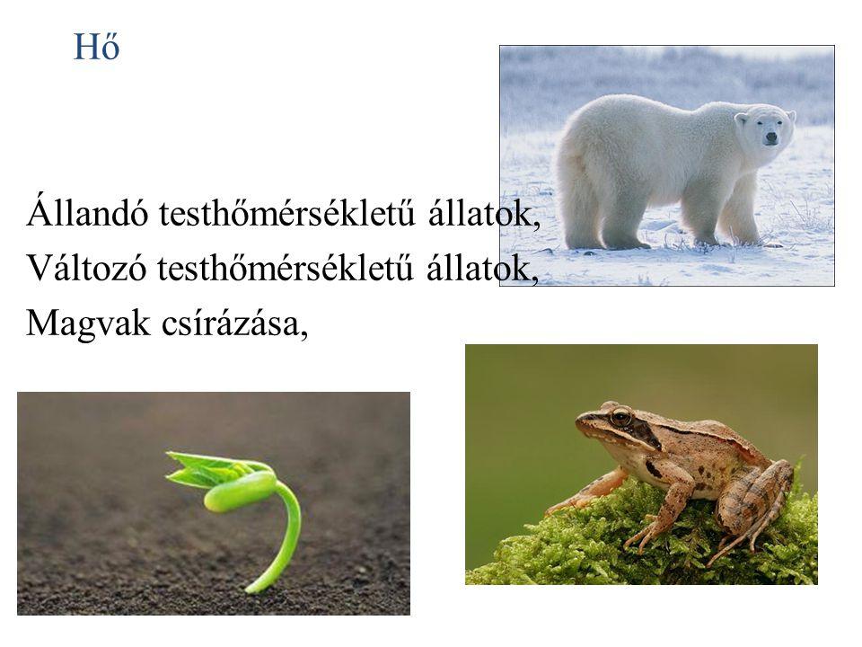 Hő Állandó testhőmérsékletű állatok, Változó testhőmérsékletű állatok, Magvak csírázása,