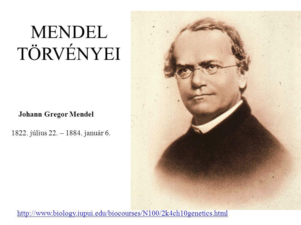 MENDEL TÖRVÉNYEI 1822. július 22. – 1884. január 6. Johann Gregor Mendel http://www.biology.iupui.edu/biocourses/N100/2k4ch10genetics.html