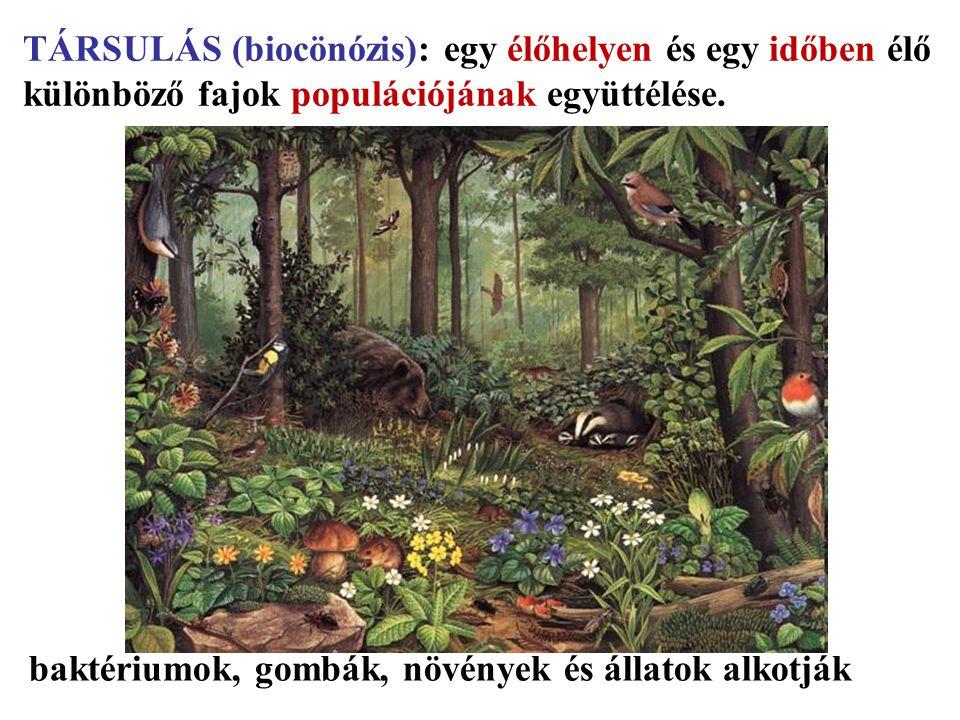 TÁRSULÁS (biocönózis): egy élőhelyen és egy időben élő különböző fajok populációjának együttélése. baktériumok, gombák, növények és állatok alkotják