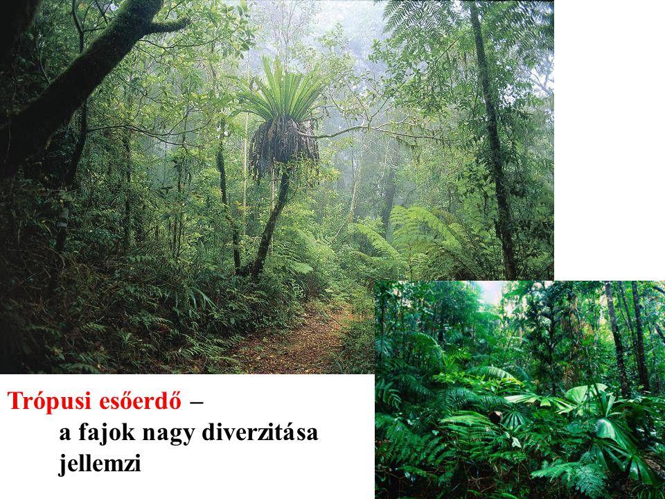 Trópusi esőerdő – a fajok nagy diverzitása jellemzi
