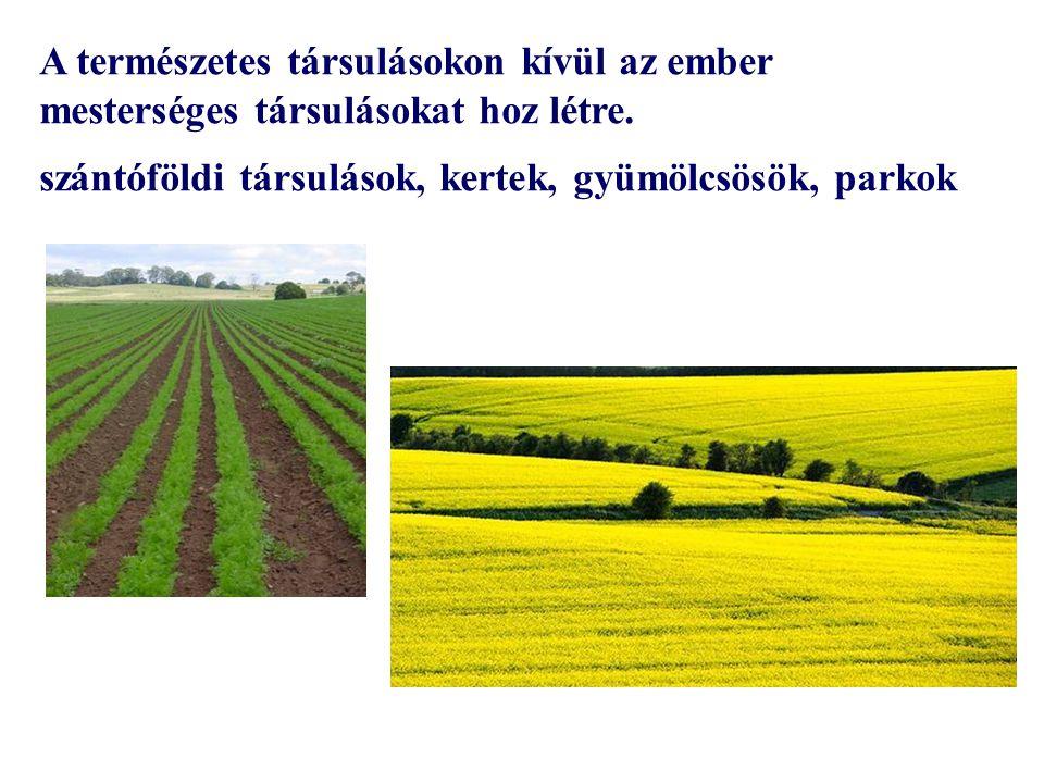 A természetes társulásokon kívül az ember mesterséges társulásokat hoz létre. szántóföldi társulások, kertek, gyümölcsösök, parkok