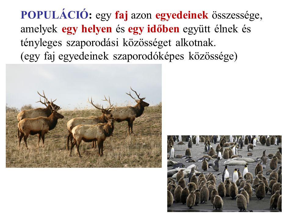 POPULÁCIÓ: egy faj azon egyedeinek összessége, amelyek egy helyen és egy időben együtt élnek és tényleges szaporodási közösséget alkotnak. (egy faj eg