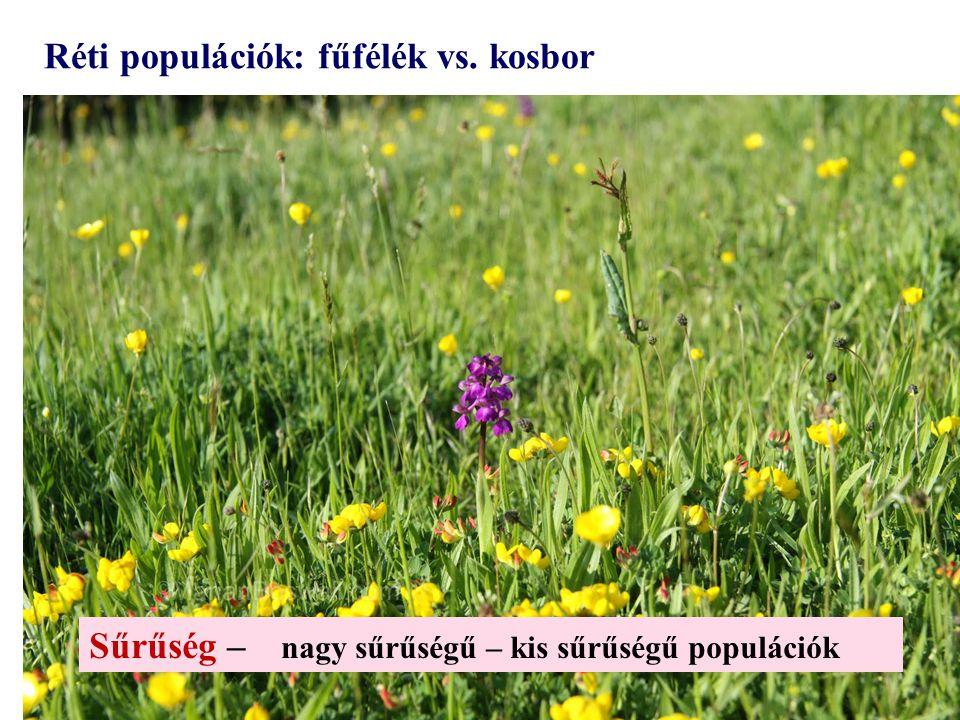 Réti populációk: fűfélék vs. kosbor Sűrűség – nagy sűrűségű – kis sűrűségű populációk
