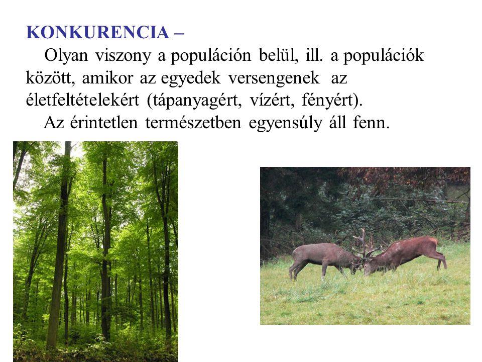 KONKURENCIA – Olyan viszony a populáción belül, ill. a populációk között, amikor az egyedek versengenek az életfeltételekért (tápanyagért, vízért, fén